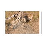 Cheetah On The Move Car Magnet 20 x 12