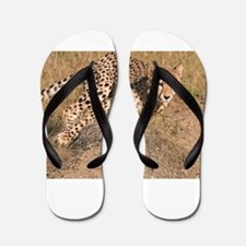 Cheetah On The Move Flip Flops
