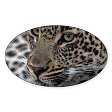 Leopard Portrait Decal