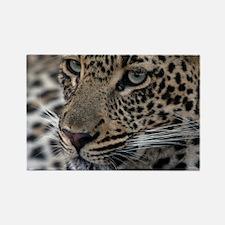 Leopard Portrait Rectangle Magnet