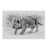 Lion Cub Stalking Postcards (Package of 8)