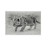 Lion Cub Stalking Rectangle Magnet (100 pack)