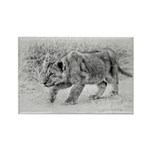 Lion Cub Stalking Rectangle Magnet (10 pack)