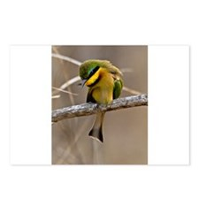 Little Bee Eater Postcards (Package of 8)