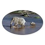 Follow Me Sticker (Oval 50 pk)