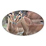 Impala Love Sticker (Oval)
