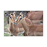 Impala Love Mini Poster Print