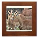 Impala Love Framed Tile