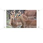 Impala Love Banner