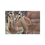 Impala Love Rectangle Magnet (100 pack)