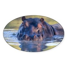 Hippo Decal