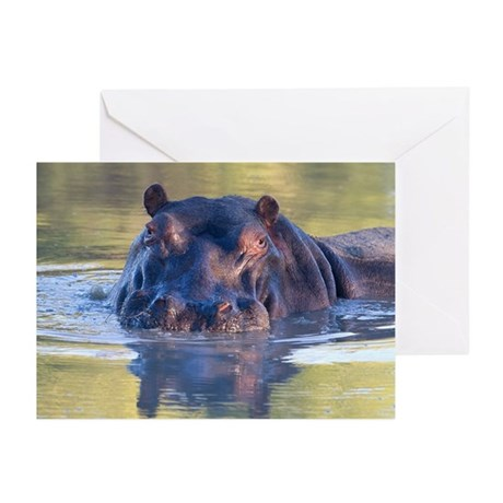 Hippo Greeting Cards (Pk of 20)