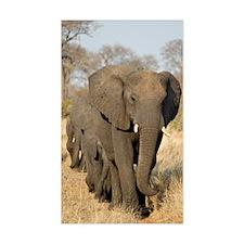 Elephants Stroll Decal
