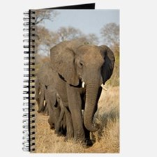 Elephants Stroll Journal