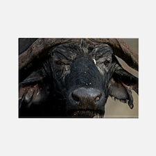 Buffalo Portrait Rectangle Magnet