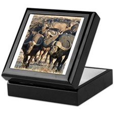 Buffalo Stare Down Keepsake Box