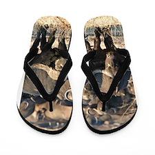 Buffalo Stare Down Flip Flops