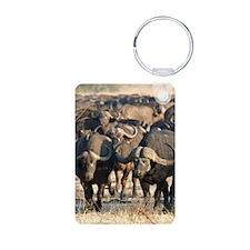 Buffalo Stare Down Keychains
