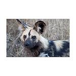 African Wild Dog 38.5 x 24.5 Wall Peel