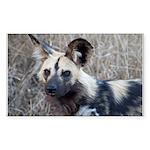 African Wild Dog Sticker (Rectangle 10 pk)
