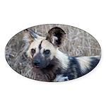 African Wild Dog Sticker (Oval 50 pk)