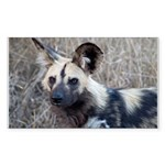 African Wild Dog Sticker (Rectangle)