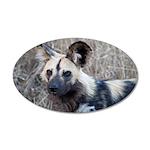 African Wild Dog 38.5 x 24.5 Oval Wall Peel
