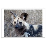 African Wild Dog Large Poster