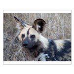 African Wild Dog Small Poster