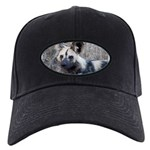 African Wild Dog Black Cap