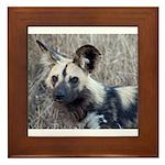 African Wild Dog Framed Tile