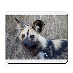 African Wild Dog Mousepad
