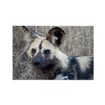 African Wild Dog Rectangle Magnet (100 pack)