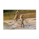 Lions Playing in Water 22x14 Wall Peel