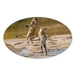 Lions Playing in Water Sticker (Oval 10 pk)