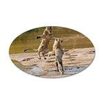 Lions Playing in Water 22x14 Oval Wall Peel