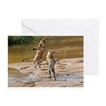 Lions Playing in Water Greeting Cards (Pk of 10)