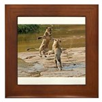 Lions Playing in Water Framed Tile