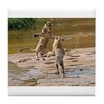 Lions Playing in Water Tile Coaster