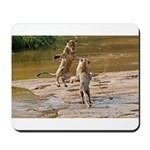 Lions Playing in Water Mousepad