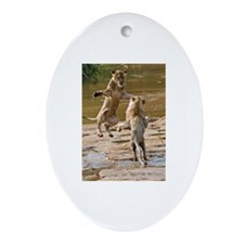 Lions Playing in Water Ornament (Oval)