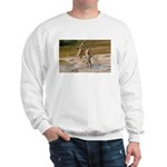 Lions Playing in Water Sweatshirt
