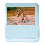 Lions Playing in Water baby blanket