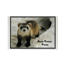 Black-Footed Ferret : Rectangle Magnet (100 pack)