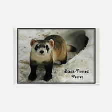 Black-Footed Ferret : Rectangle Magnet (100 pack)