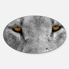 Lion Eyes Decal