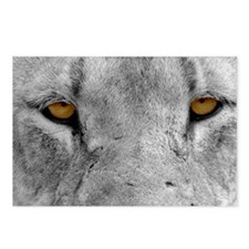 Lion Eyes Postcards (Package of 8)