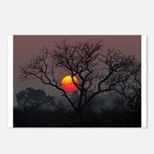 Londolozi Sunset Postcards (Package of 8)