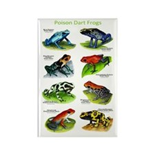 Poison Dart Frogs Rectangle Magnet