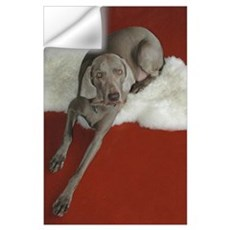 Beautiful AKC Champion Weimaraner photo Wall Decal